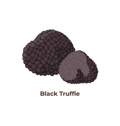Black truffle mushrooms isolated on white vector