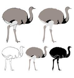 Ema bird in profile view vector