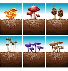 Fresh mushrooms growing in the ground vector