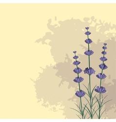 Lavender sprigs on ink spots background vector