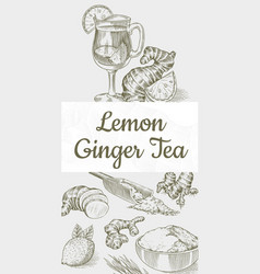ginger tea poster chopped rhizome or root fresh vector image