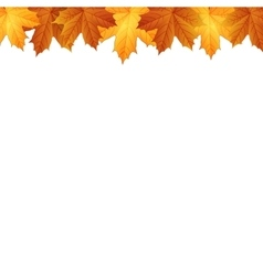 border autumn maples leaves vector image