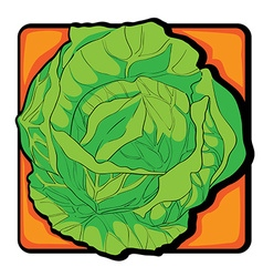 Cabbage clip art vector