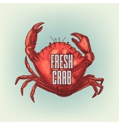 Graphic realistic crab vector image