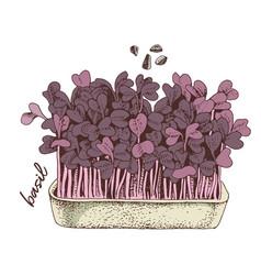 Hand drawn basil microgreens healthy food vector