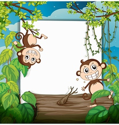 Monkeys and white board vector image vector image