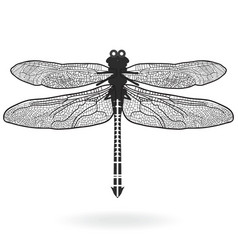 Dragonfly vector image