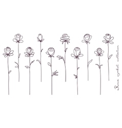 Roses Collection of isolated rose flower sketch vector image vector image