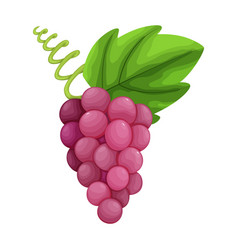 Colorful fruit grapes or grape icon vector