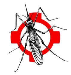 hand drawn mosquito on crosshatch vector image