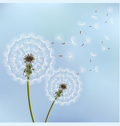 background with spring dandelion blowing vector image