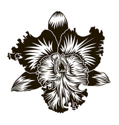 floral element orchid flower silhouette isoleted vector image