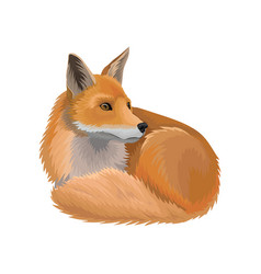 Red lying fox wild northern forest animal vector