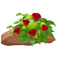Red roses with leaves on white background vector