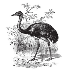 South american ostrich vintage vector
