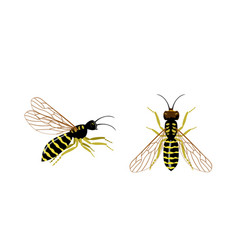 Wasp icons set set hornet or wasp icons vector