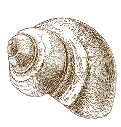 engraving snail shell vector image