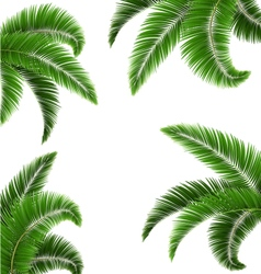 Green palm tree leaves isolated on white vector image