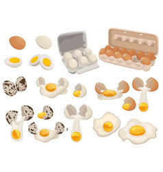 set farm eggs for food collection chicken vector image