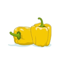 Yellow Bell Pepper Isolated on White vector image