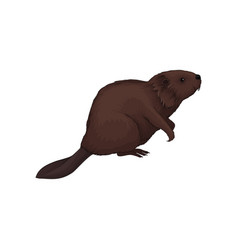 Brown beaver wild forest animal vector