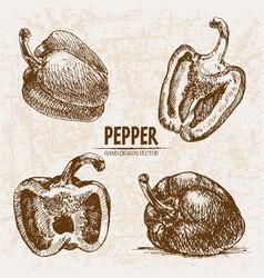 Digital detailed line art pepper vegetable vector