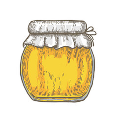 hand drawn jar of honey over white background vector image