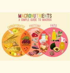 Main food groupd vector