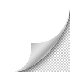 realistic blank sheet of paper with curled corner vector image