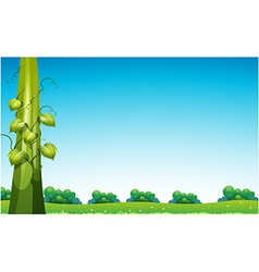 Beanstalk in field vector image
