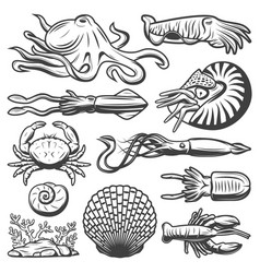 vintage marine life collection vector image