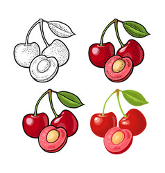 whole and half cherry berry with leaf vector image