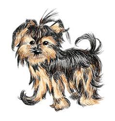 Yorkshire terrier puppy vector