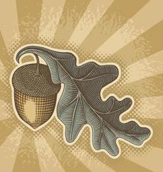 acorn sunbeam vector image