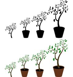 indoor plant vector image vector image