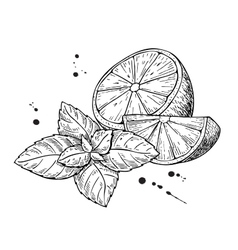 lemons and mint Isolated on white vector image