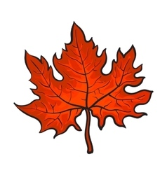 Beautiful red colored autumn maple leave isolated vector image