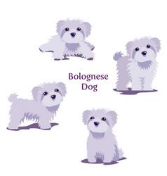 Bolognese vector