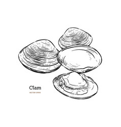 clams mussels seafood sketch style vector image