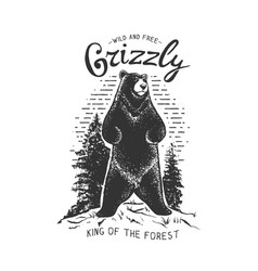 Grizzly bear in the forest vector