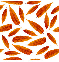 red rowan leaves isolated on white background vector image