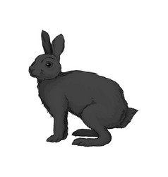 cute black hare wild forest animal vector image
