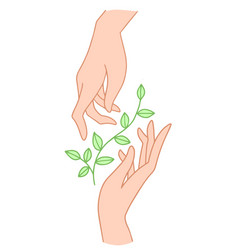 two hands hold floral plant with leaves vector image
