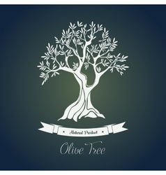 Branches on tree with olive oil berry vector image