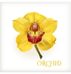 yellow orchid with stem vector image vector image
