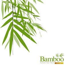 Bamboo greeting card vector