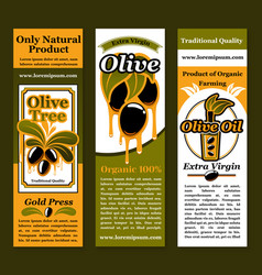 Banners for olives and olive oil product vector
