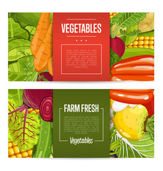 fresh farm food banners with vegetable vector image vector image
