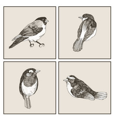 Graphic set of hand drawn birds on grey vector