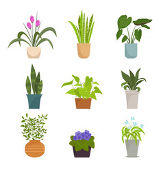home plants in pots set color collection indoor vector image